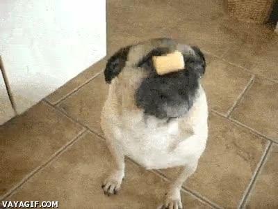 Enlace a Esto es habilidad canina