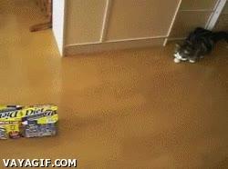 Enlace a El gato de las cajas