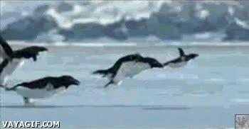 Enlace a Pingüinos volando