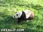 Enlace a Rolling Panda