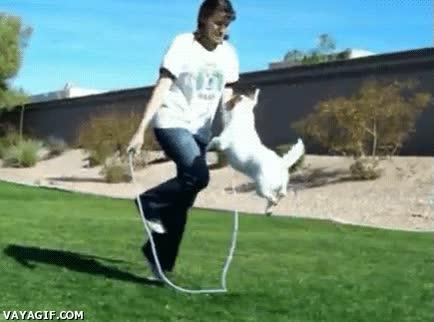 Enlace a ¡Pero qué perro tan saltimbanqui!