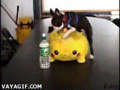 Enlace a Perro en celo