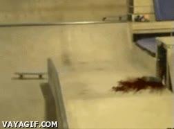 Enlace a Vigila donde haces skate