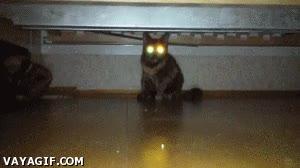 Enlace a Gatos que dan miedo