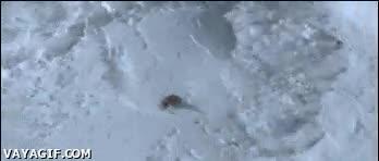 Enlace a Snowboarder en una avalancha