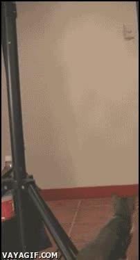 Enlace a Gato cazando un murciélago