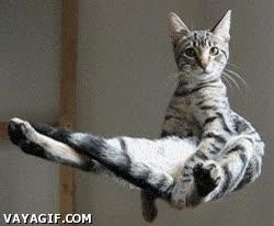 Enlace a ¡Gato volador!