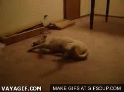 Enlace a Perro sonámbulo