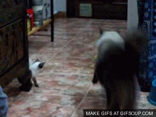 Enlace a Gatos ninja