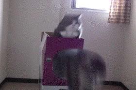 Enlace a Gatos infinitos