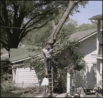 Enlace a Corte de árbol fail