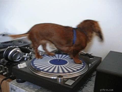 Enlace a No permitiré que pongáis el disco de Julio Iglesias otra vez