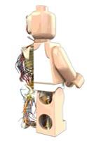 Enlace a Anatomía interna de un lego