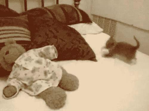 Enlace a Gato drogado
