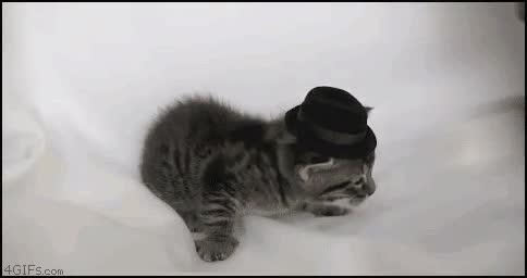 Enlace a En casa no quiero sombreros