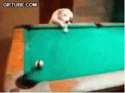 Enlace a Perros que juega mejor que tú