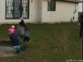 Enlace a La venganza del pavo