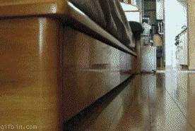 Enlace a Ninja Cat