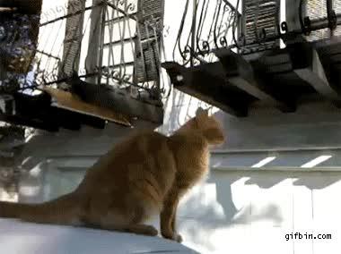 Enlace a Gato saltarín