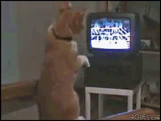 Enlace a Gato boxeador