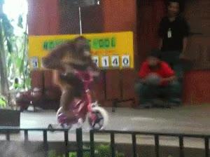 Enlace a Mono en bici