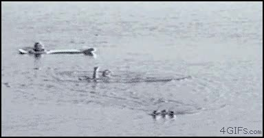 Enlace a La venganza del pato