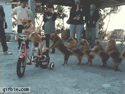 Enlace a Ciempiés canino