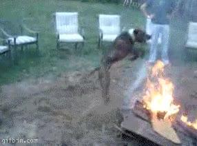 Enlace a Ritual de canino sobre fuego