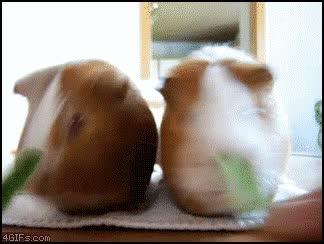 Enlace a Hamster comiendo