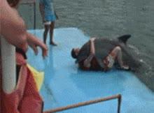 Enlace a Delfín violador