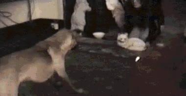 Enlace a Los gatos de mentira también asustan