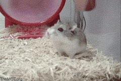 Enlace a Hamsters generadores de electricidad