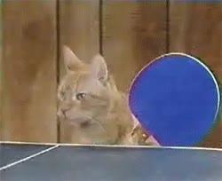 Enlace a Ping pong gatuno