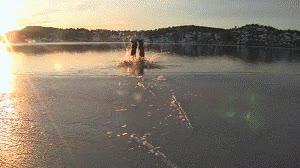 Enlace a Chapuzón en el hielo
