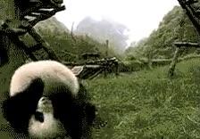 Enlace a Voltereta panda
