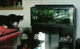 Enlace a Gatos y peces juntos no es buena idea