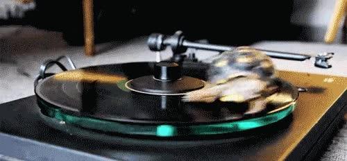 Enlace a La tortuga DJ