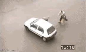 Enlace a Perros policías cada día más buenos