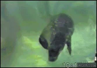 Enlace a Cómo dominar a una foca