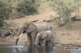 Enlace a Naturaleza viva: Elefante Vs Cocodrilo