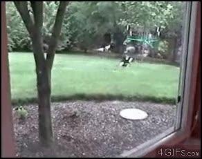 Enlace a Gato a la caza del conejo