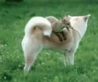 Enlace a Cómo no montar a perro