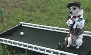 Enlace a Excelente día para practicar golf my lord