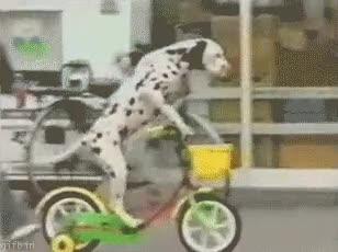 Enlace a Y tan pancho paseando con mi bici