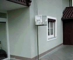 Enlace a Hoy, en inventos absurdos, el ascensor para gatos