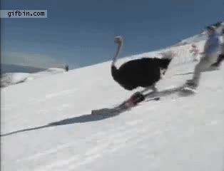 Enlace a Escena típica en la nieve