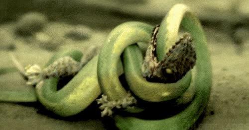 Enlace a Serpientes asesinas