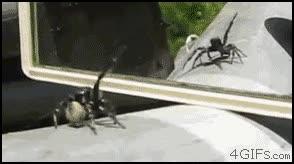 Enlace a El reflejo de la araña