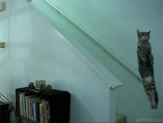 Enlace a Gato paranormal