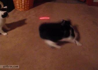 Enlace a Gato vs laser